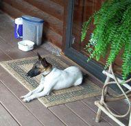 door-guard