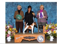 louisville-dog-show-300sdpi