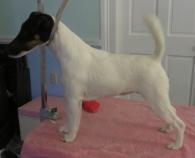 Sophie 13 months