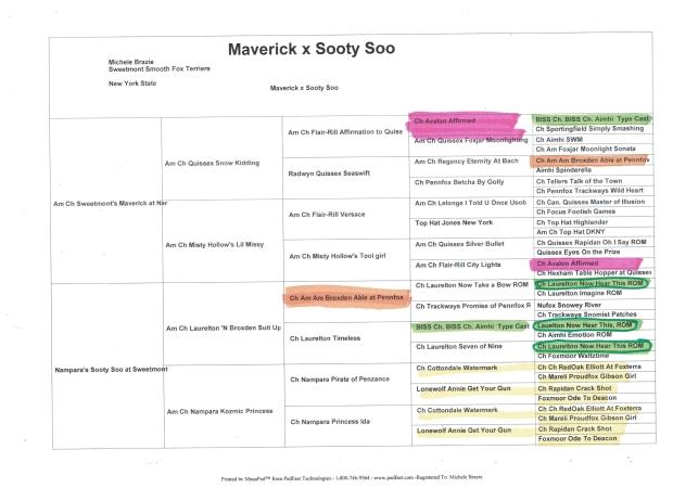 Maverick x Sooty Soo